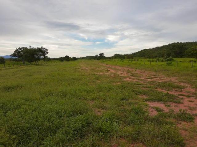2.200 alqs Solo Argiloso Região De Chuva Palmeirópolis TO - Foto 16