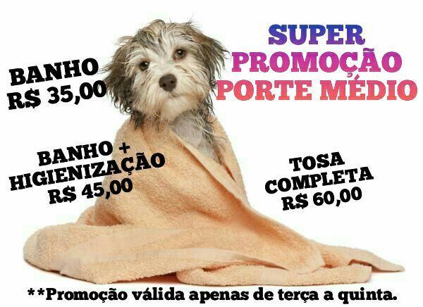 BANHO E TOSA - Foto 2