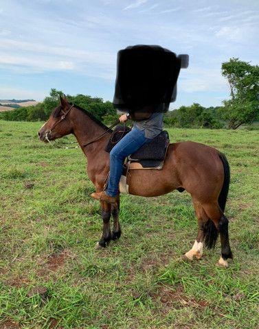 Cavalo Crioulo confirmado!! - Foto 2