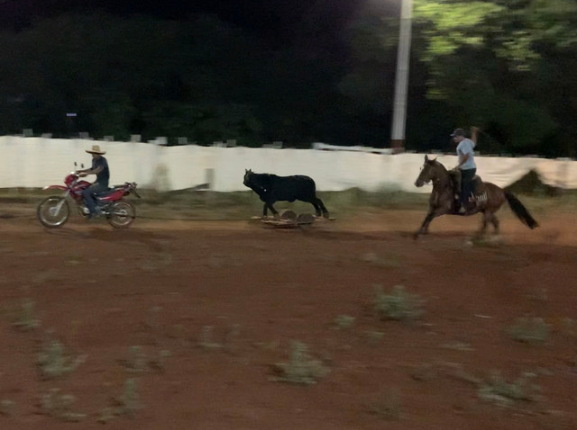 Cavalo Crioulo confirmado!! - Foto 3