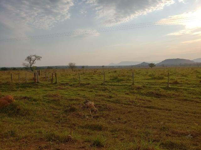Fazenda pecuária R$ 12.000,00 por HA - Foto 5