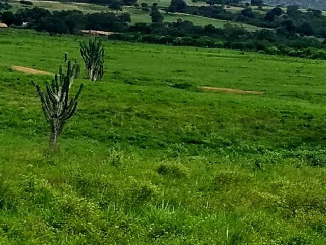 Fazenda em Ribeira do Pombal - Foto 18