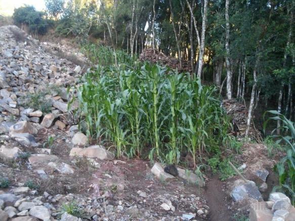 Terreno à venda em Monte bérico, Caxias do sul cod:2066 - Foto 2