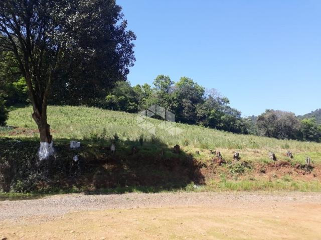 Chácara à venda em São luiz de castro, Boa vista do sul cod:9912945 - Foto 14
