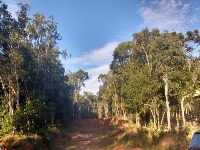 Chácara rural à venda, borda do campo, são josé dos pinhais. - Foto 4