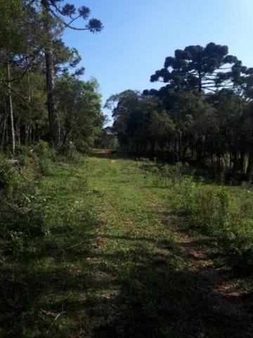 Chácara rural à venda, borda do campo, são josé dos pinhais. - Foto 14