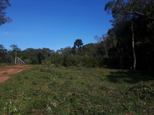 Chácara rural à venda, borda do campo, são josé dos pinhais. - Foto 15