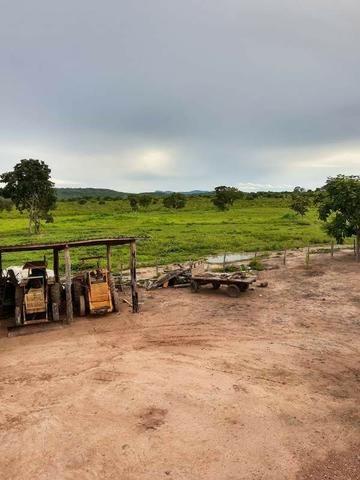 2.200 alqs Solo Argiloso Região De Chuva Palmeirópolis TO - Foto 12