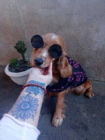 Adestrador de Cães  - Foto 5