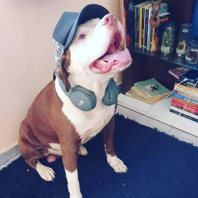 Adestrador de Cães  - Foto 2