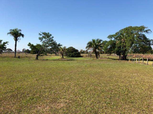 Fazenda 1.200 hectares á venda em Poconé MT - Foto 5