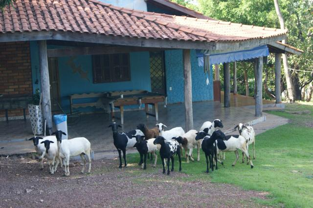 Fazenda 70 hectares á venda á 16km de Cuiabá - Foto 7
