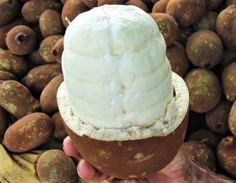 Polpa de cupuaçu - Foto 2