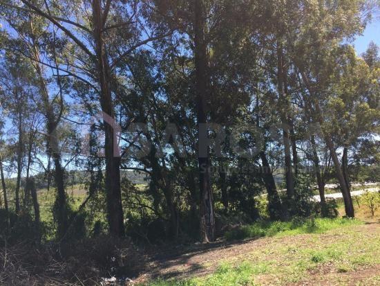 Terreno à venda em Ana rech, Caxias do sul cod:612 - Foto 6