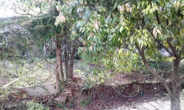 Terreno à venda em Salgado filho, Caxias do sul cod:1841