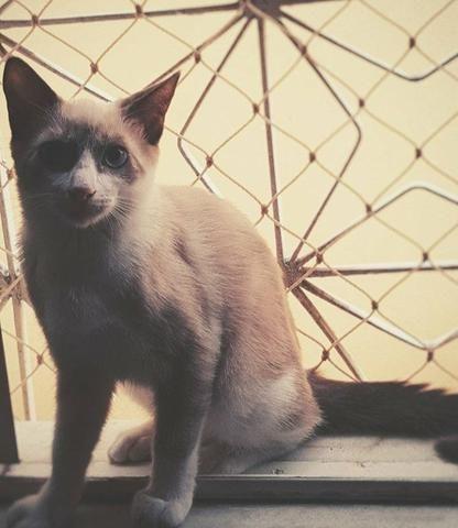 Casal de Gatos para adoção responsável - Foto 5