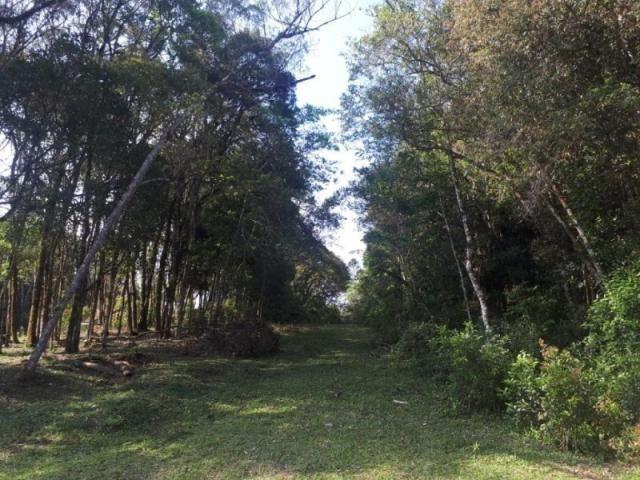Chácara rural à venda, borda do campo, são josé dos pinhais. - Foto 13