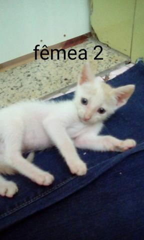 Doação de gatinhos - Foto 2