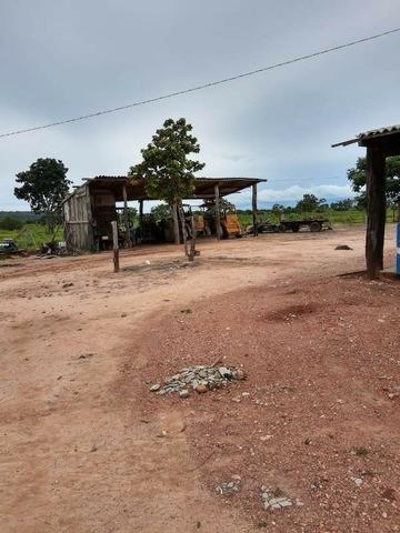 2.200 alqs Solo Argiloso Região De Chuva Palmeirópolis TO - Foto 17