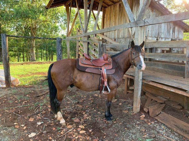 Cavalo Crioulo confirmado!! - Foto 5
