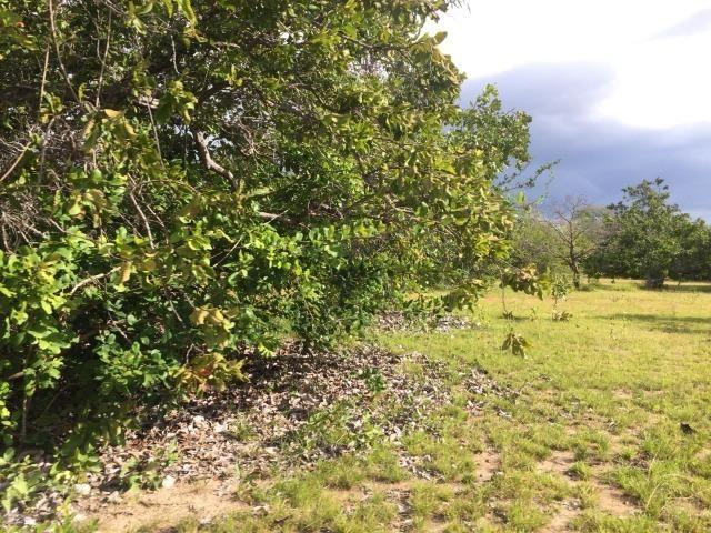 Fazenda com 450 hectares no município do Alto Alegre/RR, ler descriçao do anuncio - Foto 5