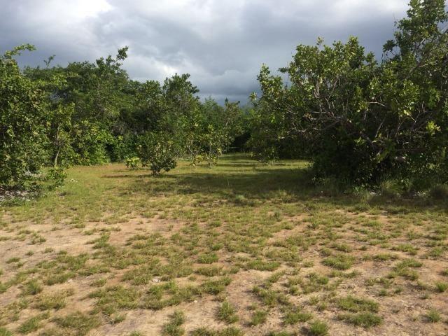Fazenda com 450 hectares no município do Alto Alegre/RR, ler descriçao do anuncio - Foto 3