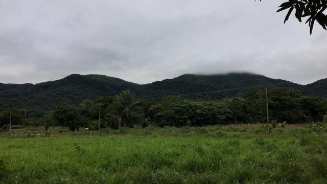 Vendo Chacara Formosa - Foto 5