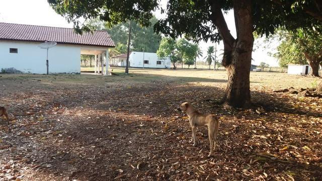 Fazenda 1.200 hectares á 20 km de Cuiabá - Foto 20