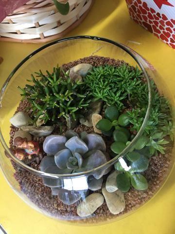 Ternários, mini jardim de suculentas e cactos