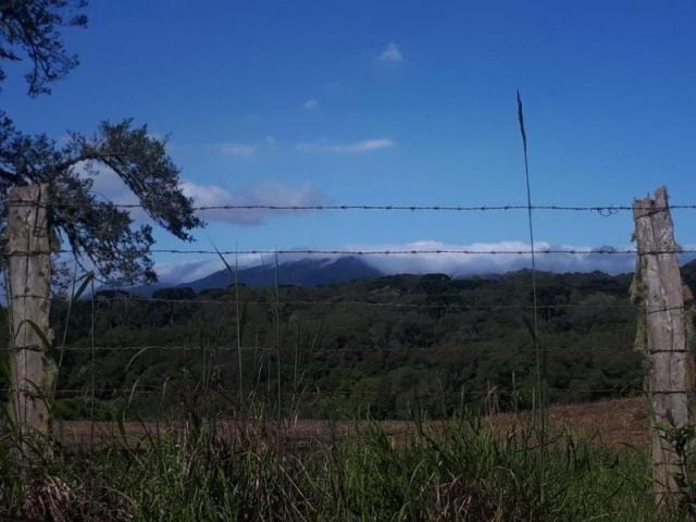 Chácara rural à venda, borda do campo, são josé dos pinhais. - Foto 7