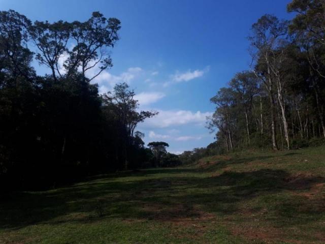 Chácara rural à venda, borda do campo, são josé dos pinhais. - Foto 17
