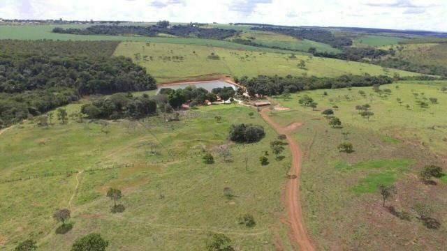 Urgente 20 hectares planalmira 35 km Anápolis. - Foto 6