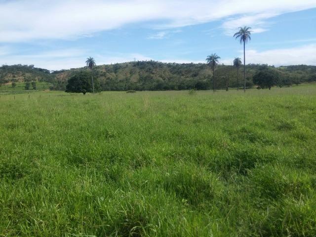 Jequitiba!! Linda fazenda de 33,4 ha WhtsAPP * Guilherme - Foto 6