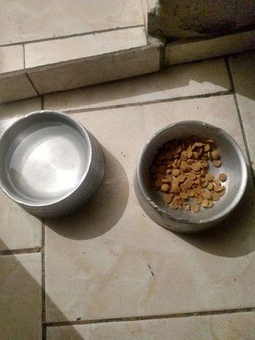 Vendo 2 pote de comida e água pra cachorro eu quero 50 reais nos 2  - Foto 4