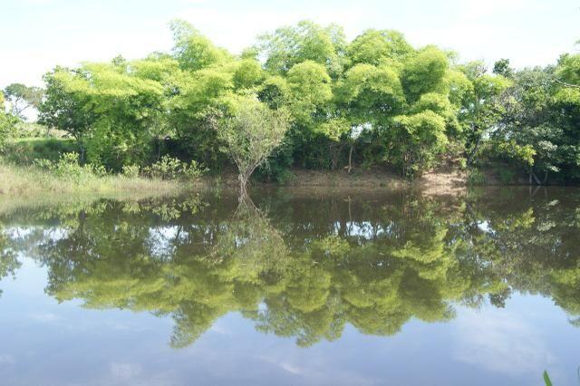 Fazenda 70 hectares á venda á 16km de Cuiabá - Foto 20