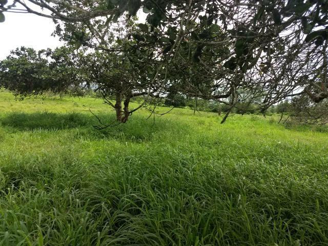 Fazenda em Ribeira do Pombal - Foto 19
