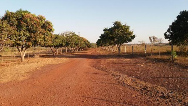 Fazenda 1.200 hectares á 20 km de Cuiabá - Foto 4
