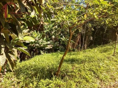 Sítio à venda em Ribeirão souto, Pomerode cod:1875 - Foto 19