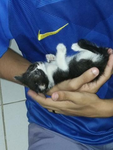 Gato macho 1 mês para adoção responsável - Foto 2
