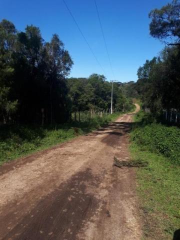 Chácara rural à venda, borda do campo, são josé dos pinhais. - Foto 16