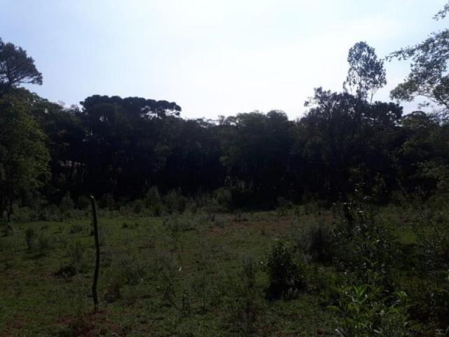 Chácara rural à venda, borda do campo, são josé dos pinhais. - Foto 8