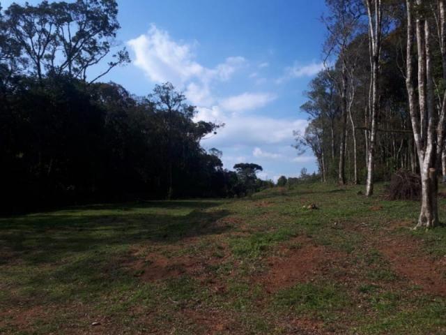 Chácara rural à venda, borda do campo, são josé dos pinhais. - Foto 6