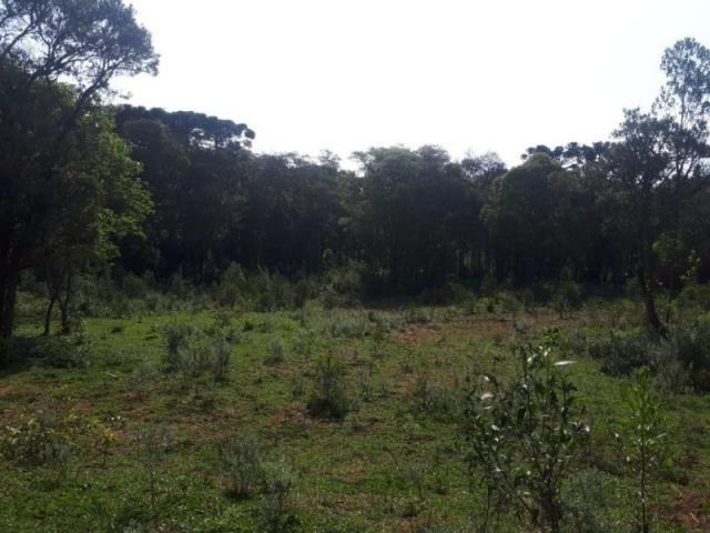 Chácara rural à venda, borda do campo, são josé dos pinhais. - Foto 12