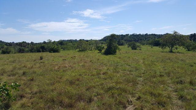 Fazenda de 1500 hectares em Alto Alegre/RR, ler descrição do anuncio - Foto 11