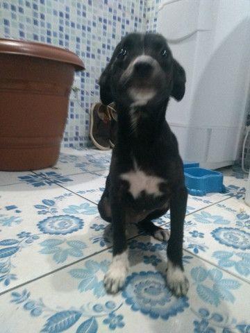 Cachorro srd Grátis - Foto 3