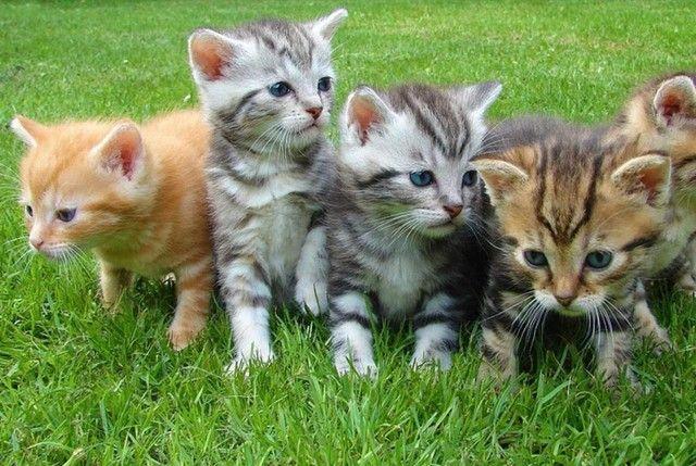 Vendendo filhotes de gatinho