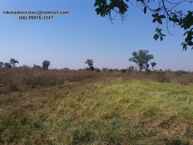 Fazenda 96 hectares nordeste mt nikolaiimoveis