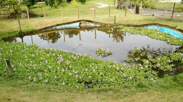 Belíssimo sítio em Agro Brasil - Cachoeiras de Macacu RJ 116 oportunidade!!!! - Foto 3