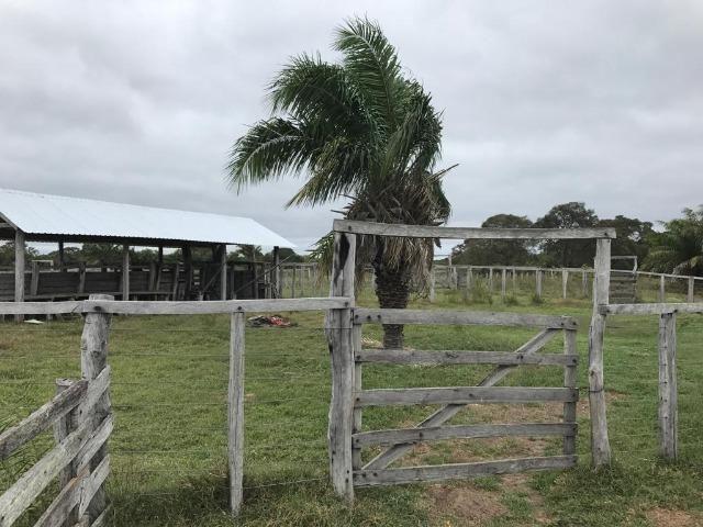 Fazenda na nhecolandia - Foto 6