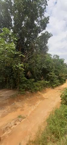 Terreno com pequeno igarapé km 25 - Foto 4